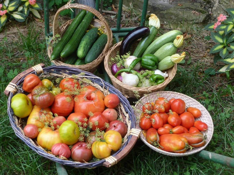 Vegetables harvested